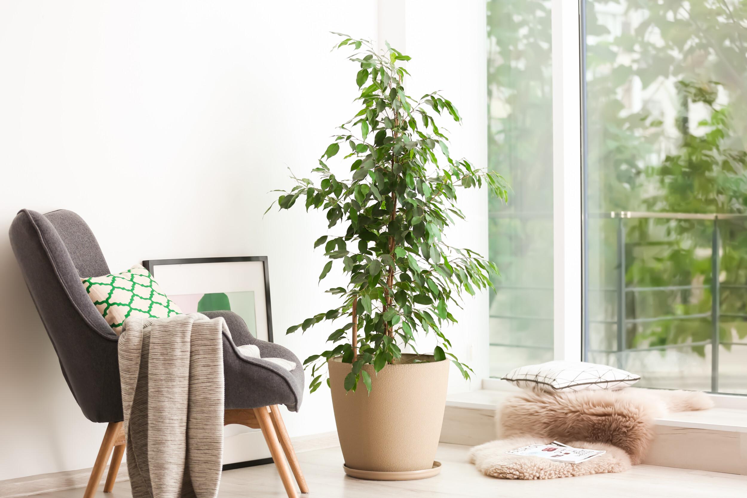 plant in modern interior