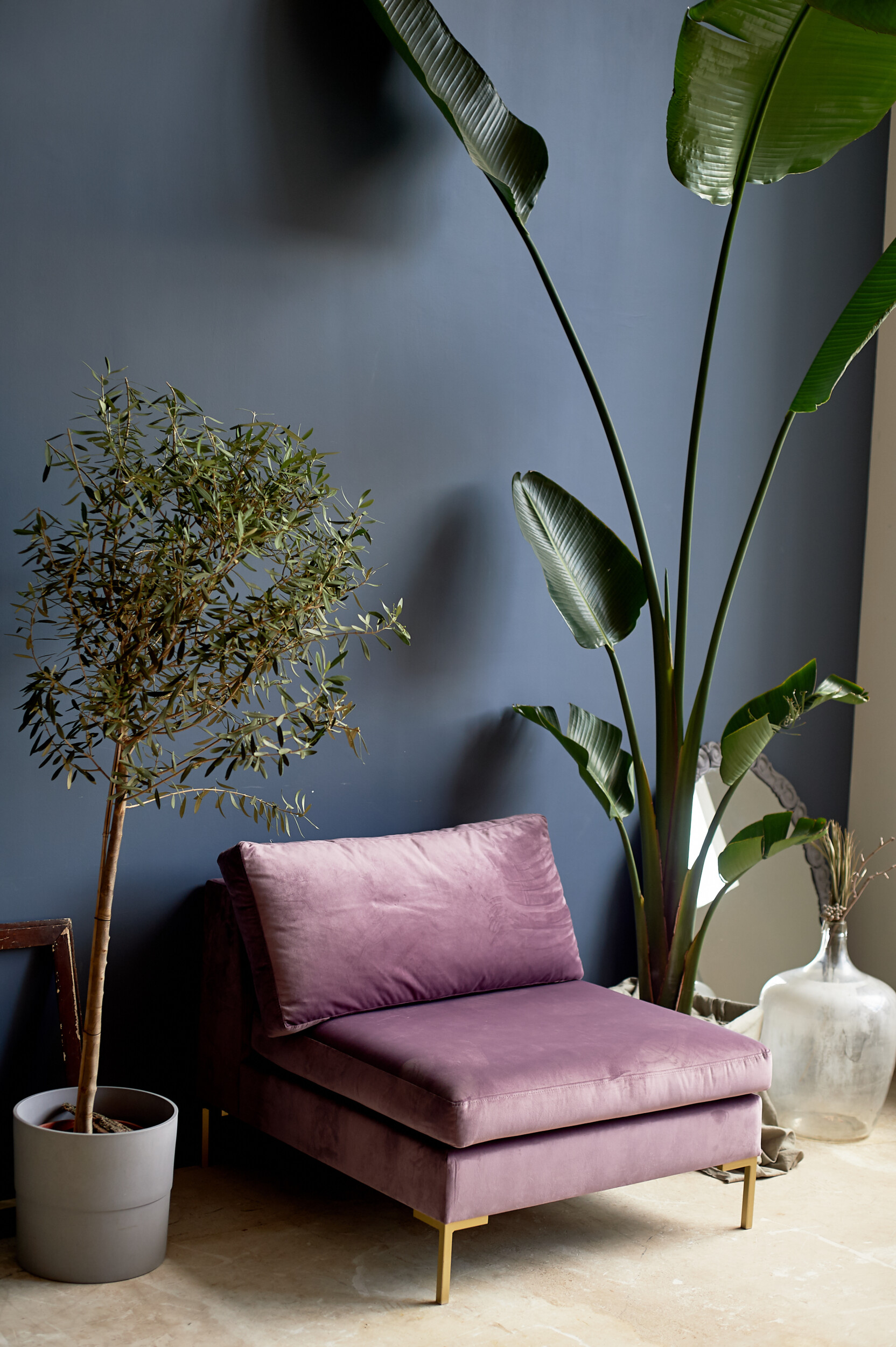 Large plants with purple chair against a dark blue wall